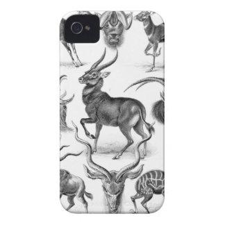 Ernst Haeckel - Antilopina iPhone 4 Case-Mate Case
