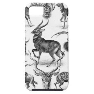 Ernst Haeckel - Antilopina iPhone 5 Cases