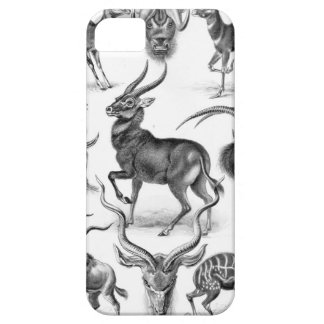 Ernst Haeckel - Antilopina iPhone 5 Cover