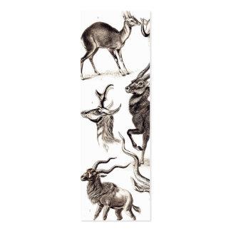 Ernst Haeckel Antilopina Mini Business Card