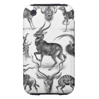Ernst Haeckel - Antilopina Tough iPhone 3 Covers