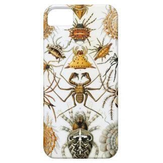 Ernst Haeckel - Arachnida iPhone 5 Cases