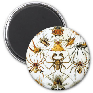 Ernst Haeckel - Arachnida Refrigerator Magnet