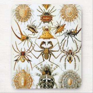 Ernst Haeckel - Arachnida Mouse Pad