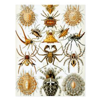 Ernst Haeckel - Arachnida Postcard