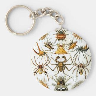 Ernst Haeckel - arácnidos Llavero Redondo Tipo Pin