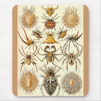 Ernst Haeckel - arácnidos Tapete De Raton