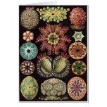 Ernst Haeckel Art Card: Ascidiae