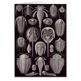 Ernst Haeckel Art Card: Aspidonia Card