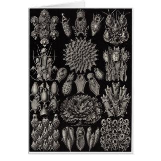 Ernst Haeckel Art Card: Bryozoa Card