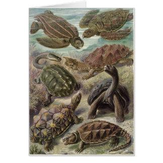 Ernst Haeckel Art Card: Chelonia Card