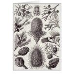 Ernst Haeckel Art Card: Coniferae