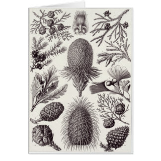 Ernst Haeckel Art Card: Coniferae Card