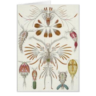 Ernst Haeckel Art Card: Copepoda Card