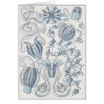 Ernst Haeckel Art Card: Ctenophorae