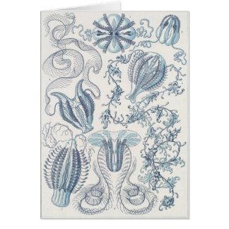 Ernst Haeckel Art Card: Ctenophorae Card