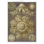 Ernst Haeckel Art Card: Discomedusae