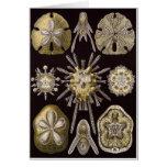 Ernst Haeckel Art Card: Echinidea