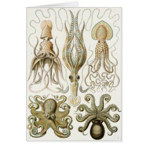Ernst Haeckel Art Card: Gamochonia