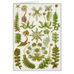 Ernst Haeckel Art Card: Hepaticae