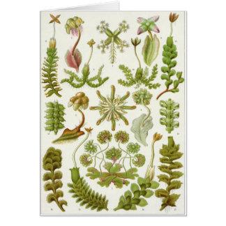 Ernst Haeckel Art Card: Hepaticae Card