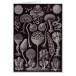 Ernst Haeckel Art Card: Mycetozoa