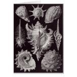 Ernst Haeckel Art Card: Prosobranchia
