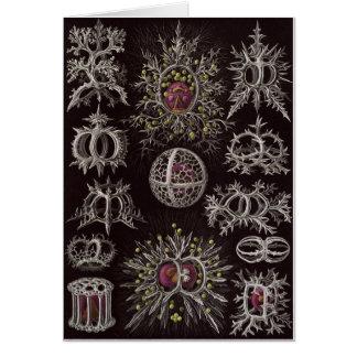 Ernst Haeckel Art Card: Stephoidea Card