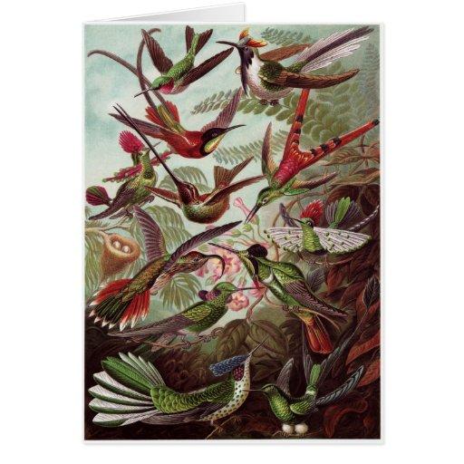 Ernst Haeckel Art Card: Trochilidae Card