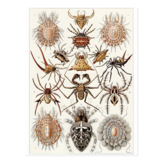 Ernst Haeckel Art Postcard: Arachnida