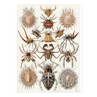 Ernst Haeckel Art Postcard: Arachnida Postcard