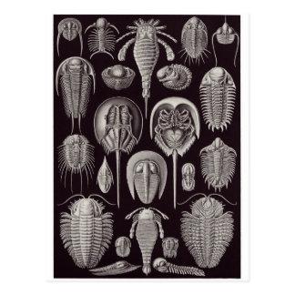 Ernst Haeckel Art Postcard: Aspidonia Postcard
