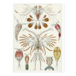 Ernst Haeckel Art Postcard: Copepoda