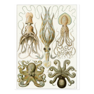 Ernst Haeckel Art Postcard: Gamochonia