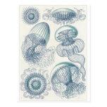 Ernst Haeckel Art Postcard: Leptomedusae