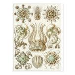 Ernst Haeckel Art Postcard: Narcomedusae