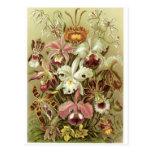 Ernst Haeckel Art Postcard: Orchidae
