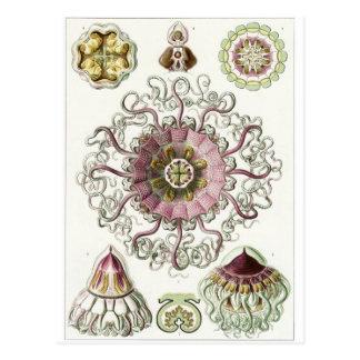 Ernst Haeckel Art Postcard: Peromedusae