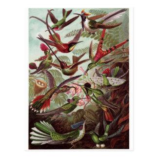 Ernst Haeckel Art Postcard: Trochilidae