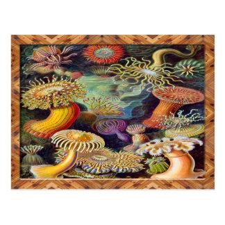 Ernst Haeckel Art Print:Actiniae Postcard