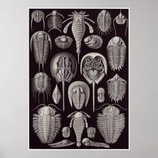 Ernst Haeckel Art Print: Aspidonia Poster