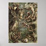Ernst Haeckel Art Print: Batrachia