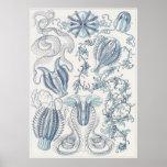 Ernst Haeckel Art Print: Ctenophorae