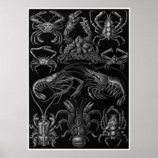 Ernst Haeckel Art Print: Decapoda