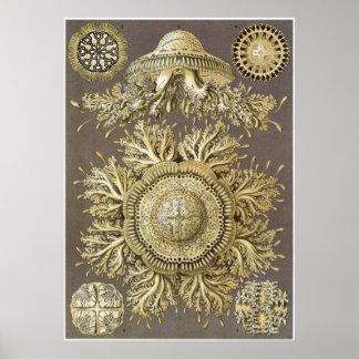 Ernst Haeckel Art Print: Discomedusae