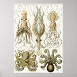 Ernst Haeckel Art Print: Gamochonia