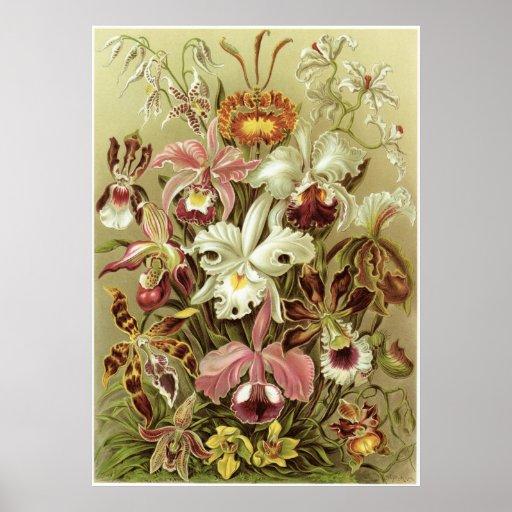 Ernst Haeckel Art Print: Orchidae