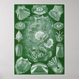 Ernst Haeckel Art Print: Teleostei