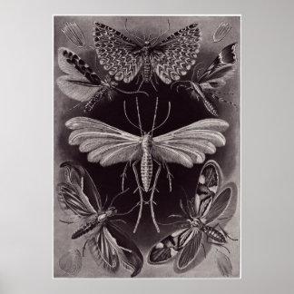 Ernst Haeckel Art Print: Tineida