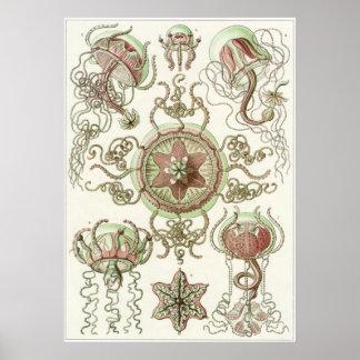 Ernst Haeckel Art Print: Trachomedusae Poster